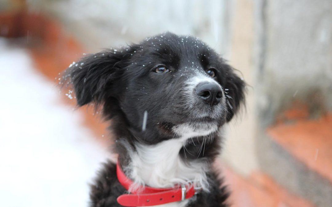 DISTURBO QUIETE PUBBLICA: se il cane abbaia cosa fare?