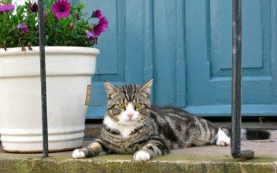 Gatti in condominio: il regolamento non può vietarli ma il locatore si