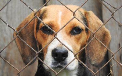 Animali maltrattati: rubarli non è furto se li vuoi salvare