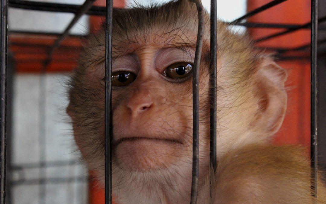SPERIMENTAZIONE ANIMALE e lo STOP del Consiglio di Stato