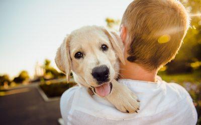 Anagrafe canina, tutto quello che c'è da sapere se vuoi prendere un cane