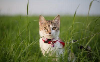 Guinzaglio per quali animali e perché è obbligatorio?