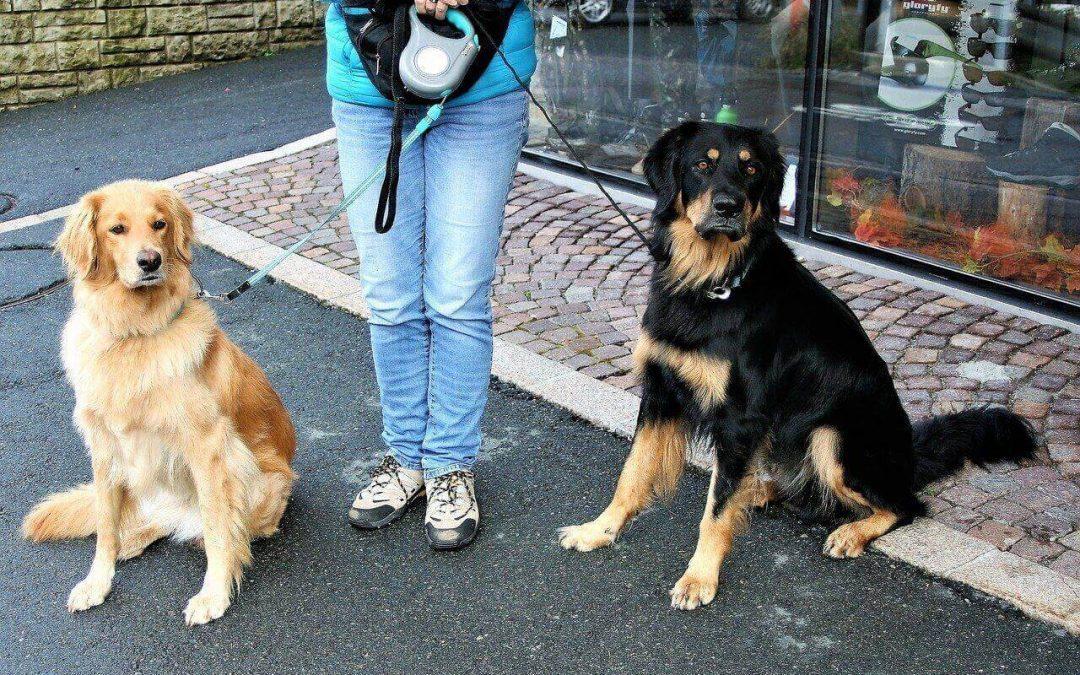 Dog Sitter paga i danni cagionati dal cane portato a spasso, quando e perchè?